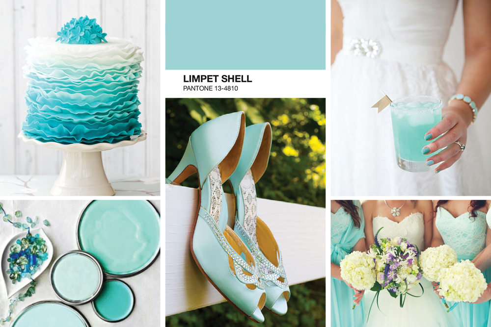 limpet Shell Mood Board